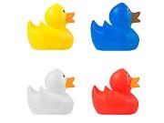 Pato Duck
